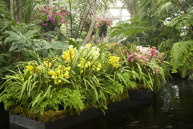 The New York's Botanical Garden Orchid Show: Key West Contemporary