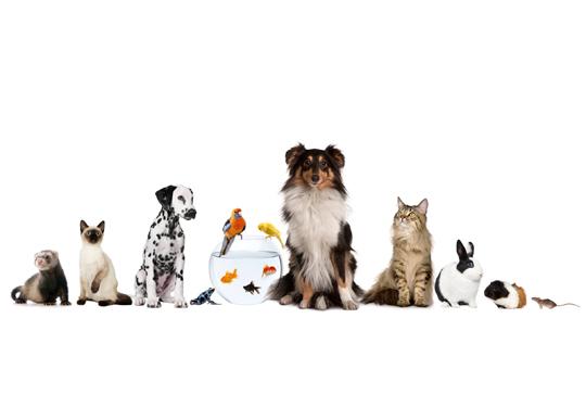 Pet Fashion Weekend Hits the Hester Street Fair