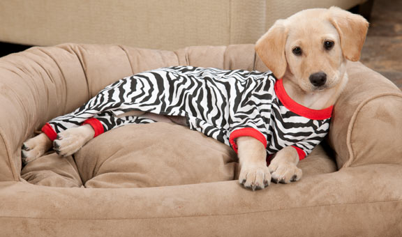 Keep Your Canine Warm with the Essential Pieces of Dog Clothing