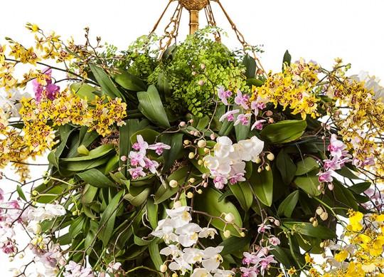 Photo: Courtesy of nybg.com