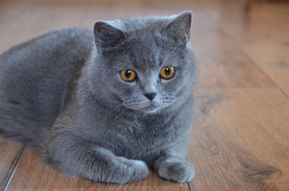 Image: courtesy of pets4homes.co.uk