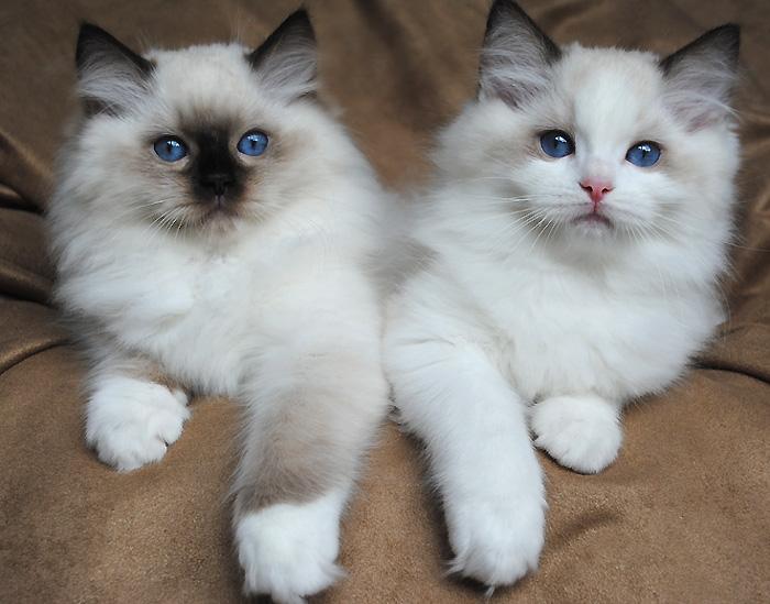 Image: courtesy of animalia-life.com