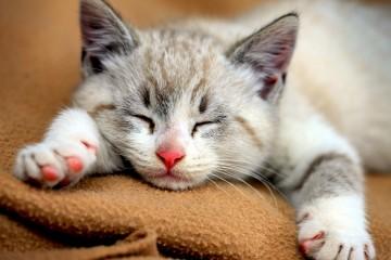 6784063-cute-cats-hd