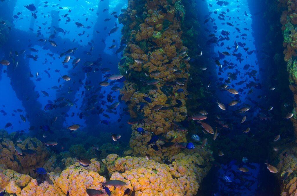 coral reef gabon