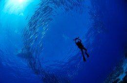 enric diving