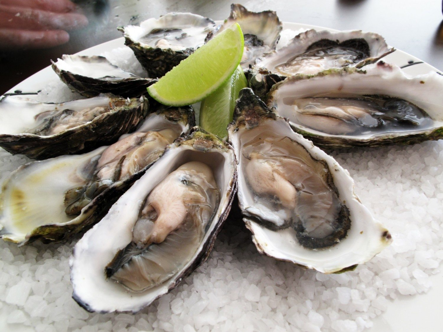 Billion Oyster Project Teaches Kids to be Citizen Scientists