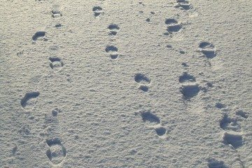 footsteps_in_the_snow_by_panthera_lee-d37unkz