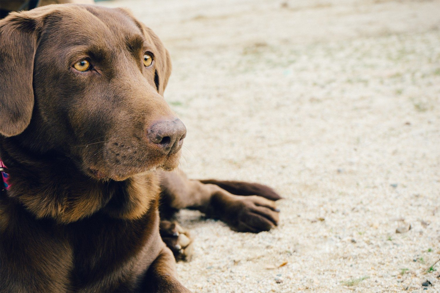 Chinese Herbalist And Nutritionist Marc Ching's Top 3 Tips for Preventative Pet Care