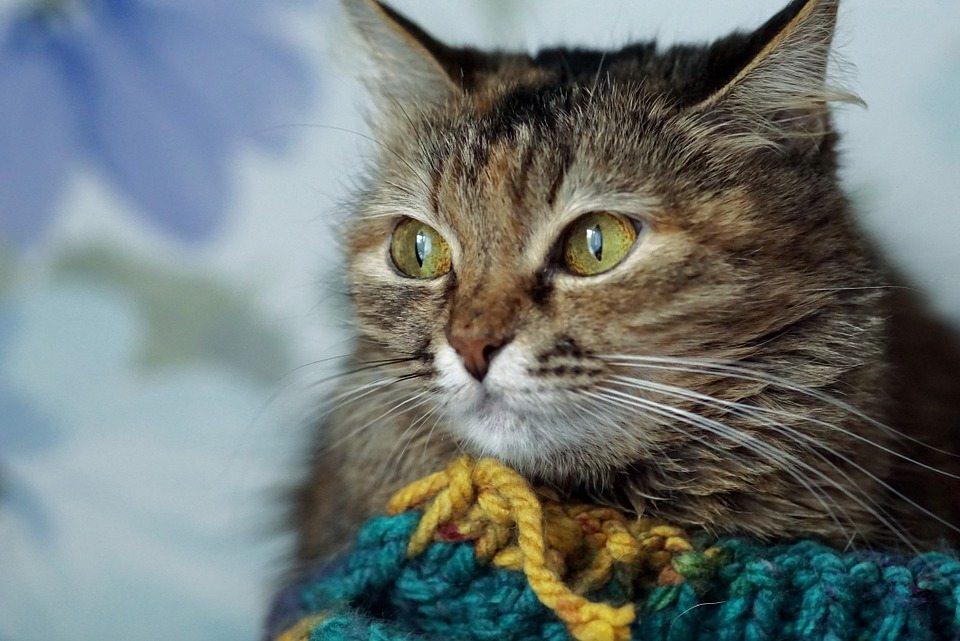 cat-1005489_960_720