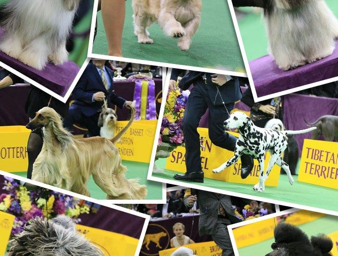 2017dogshow_collage_660x800