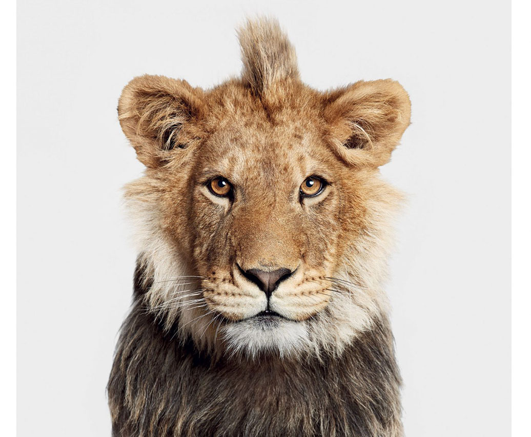 """""""The Animal Kingdom: A Collection of Portraits"""" is a Stunning Compilation of Animal Portraits by Randal Ford"""